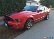 2009 Ford Mustang Shelby  for Sale