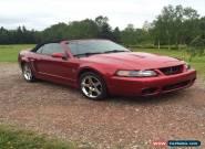 Ford: Mustang SVT Cobra for Sale