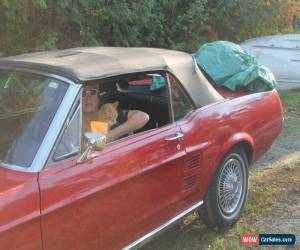 Classic Ford: Mustang convertible for Sale