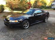1999 Ford Mustang Cobra Convertible for Sale