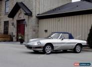 1984 Alfa Romeo Spider for Sale