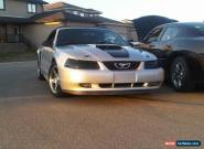 Ford: Mustang 35 Anniversary Edition for Sale